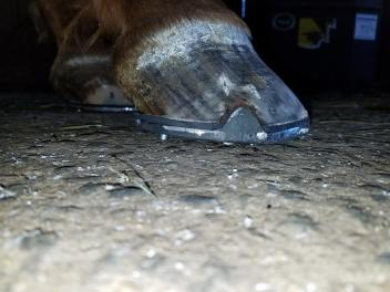 Proper shoeing based on good diagnostics is essential to keeping the equine athlete at peak performance!